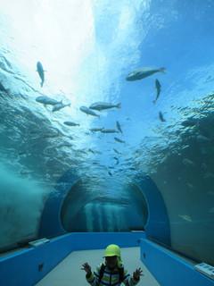 ま の 水族館 とじ ご利用案内