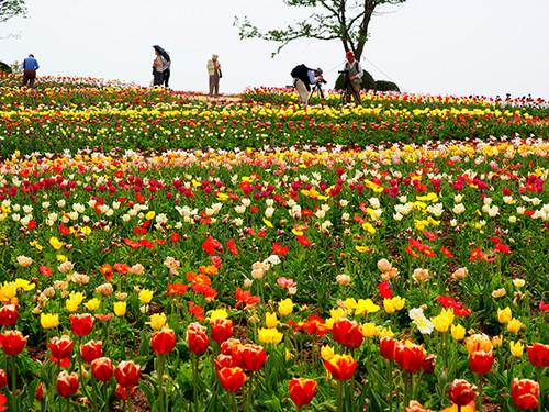 Flowerworld_image