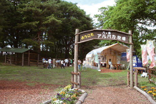 Alpaca_farm2